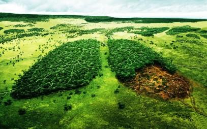Pecuária ameaça ecossistemas do mundo inteiro.