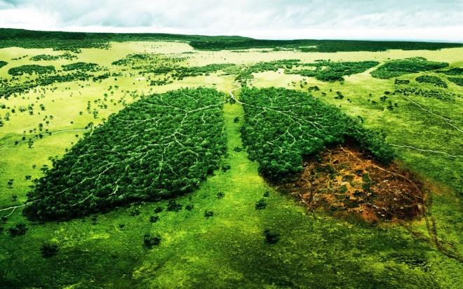 Consumo de água na pecuária ameaça preservação ambiental