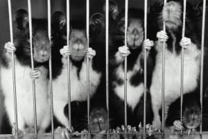 Modelo animal precisa ser superado na ciência.