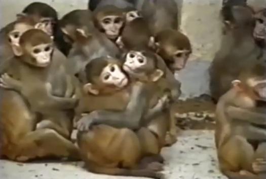 macacos ONPRC eua 2007