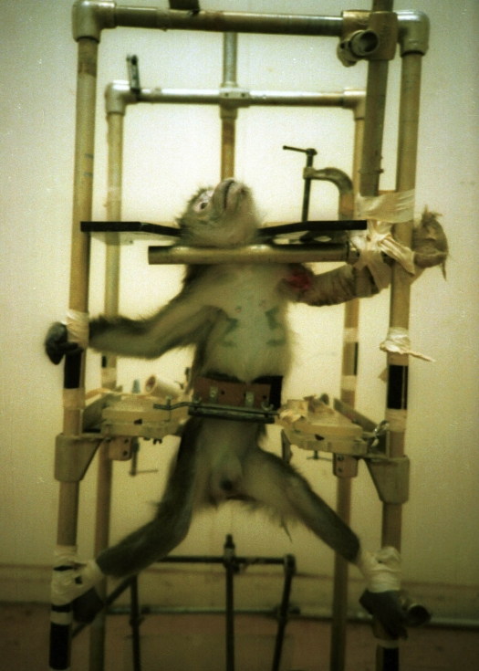 Esta foto foi tirada em 1981 por Pacheco - ela é um ícone da crueldade em experimentação animal.
