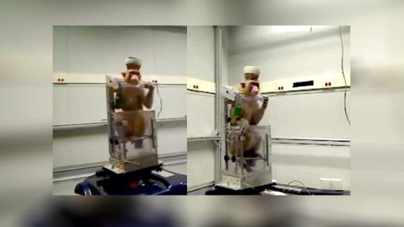 miguel nicolelis macaco torturado