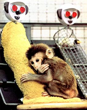 Quem se importa com macacos?