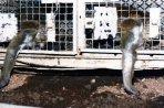 Os funcionários do laboratório não alimentavam os animais direito, por isso, eles caçavam os restos de comida no chão