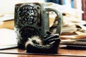 Fotografia da mesa de Taub, incluindo uma mão decepada de um macaco