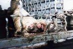 Um dos macacos, Paulo, mastigou o curativo do seu membro debilitado, depois, rasgou sua pele e expôs o próprio osso. O curativo nunca havia sido renovado