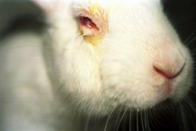 Além de caro, o modelo animal é um atraso para o avanço científico.