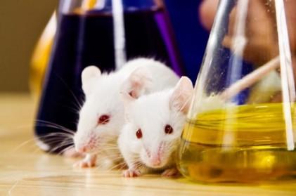 Apesar das evidências que demonstram a pouca utilidade da experimentação animal, o lobby da indústria farmacêutica persiste.