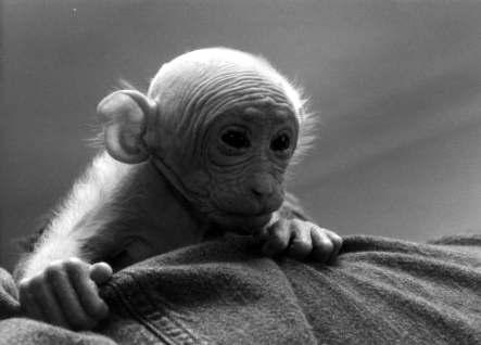 Os cientistas querem fazer você acreditar que os animais são coisas e produtos. Na verdade, quem está vendível são os próprios cientistas.
