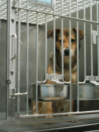 Em testes toxicológicos os cães ingerem de maneira forçada doses agudas de venenos, levando-os até a morte.