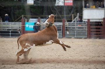 Farm Watch Southland rodeo 12.02.2017