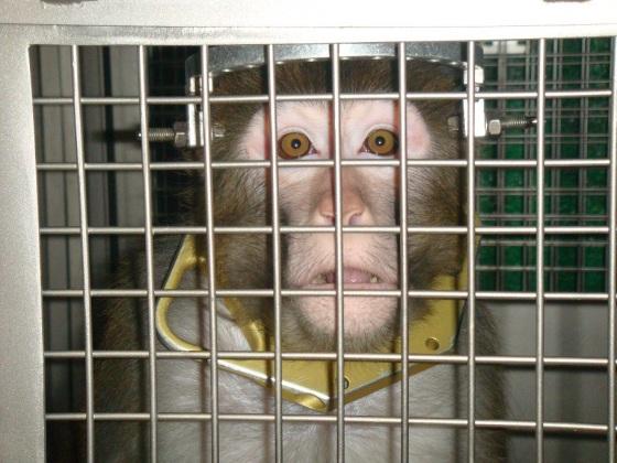"""""""Modelos animais"""" colocam a vida humana em risco."""