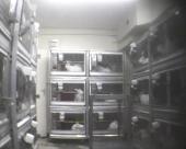 Havia cerca de 100 coelhos no laboratório