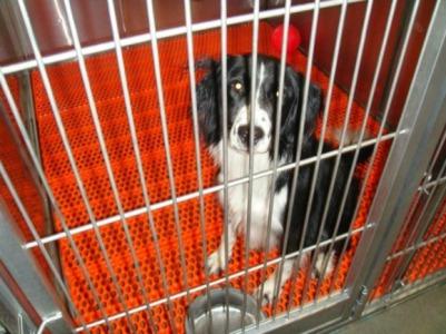 Ironicamente, testes em animais podem impedir que medicamentos eficazes cheguem ao mercado.