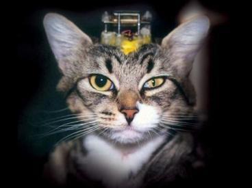 Avanços científicos não dependem da experimentação animal.