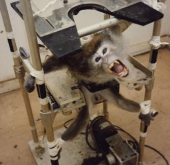 Conheça a verdade por trás dos testes em animais.