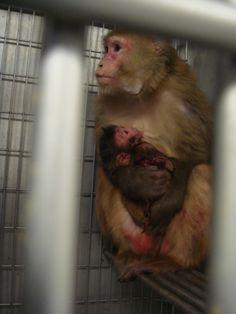 Além da preocupação ética, aspectos técnicos deixam claro que precisamos abandonar as pesquisas com animais.