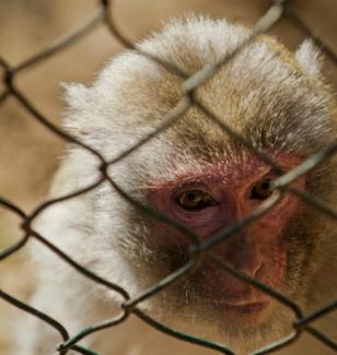 Zoológicos ensinam que é aceitável aprisionar animais para benefício humano.