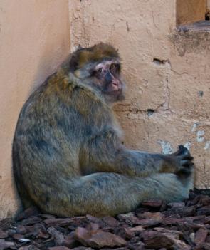Investigação revelou a solidão dos animais em cativeiro.