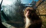 Investigação Animal Equality