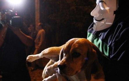 """Intoxicar um beagle até a morte pode ser classificável como """"boa ciência""""?"""
