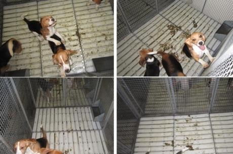Cães dormiam nas próprias fezes no Instituto Royal.
