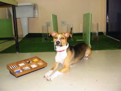 Os estudos feitos com Sofia (foto) demonstram que é perfeitamente possível compreender o comportamento animal sem confinamento laboratorial.