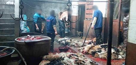 Não comprar produtos feitos com pele animal é a forma mais eficaz de acabar com isso.