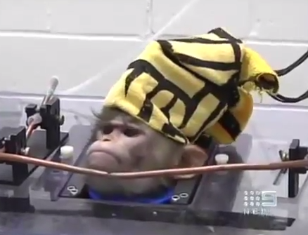 macaco torturado