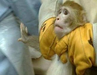 testes em animais 5