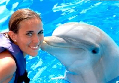 Golfinhos são capturados ilegalmente e vendidos para parques de diversão.