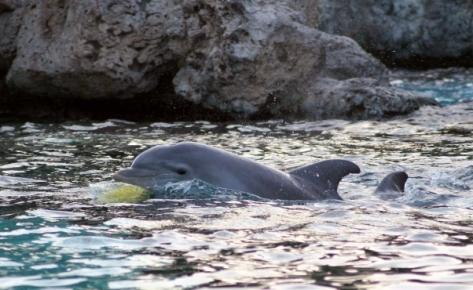 golfinhos seaworld3