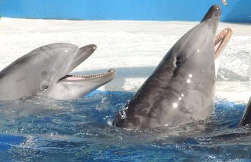 golfinhos seaworld4