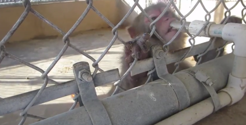 Primatas não tinham fornecimento adequado de água.