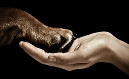 Direitos Animais