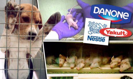 Beagles, ratos e leitões foram usados em testes.
