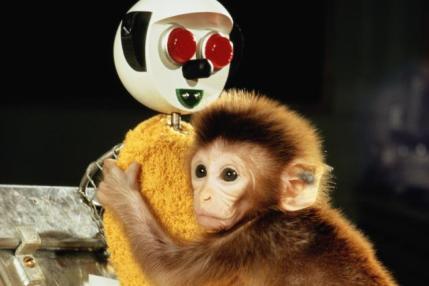 harry harlow macaco