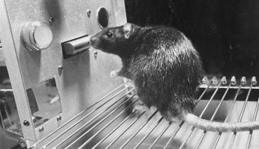 Formação sem uso de animais já é uma realidade em países como Alemanha e Inglaterra – Brasil ainda precisa avançar na questão.