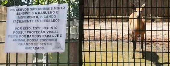 Alerta do próprio zoológico diz que os animais podem ficar estressados com o público.