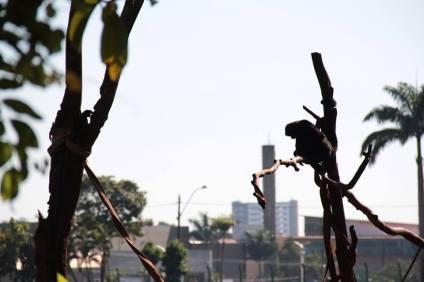 Animais vivem em meio à poluição da cidade. (Foto: Alex Peguinelli)