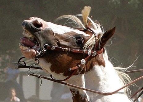 Crueldade com cavalos