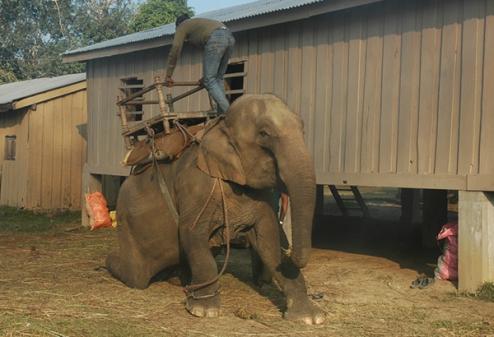 tailandia elefantes crueldade