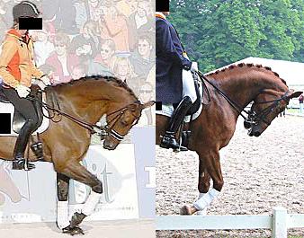 adestramento cavalo hipismo