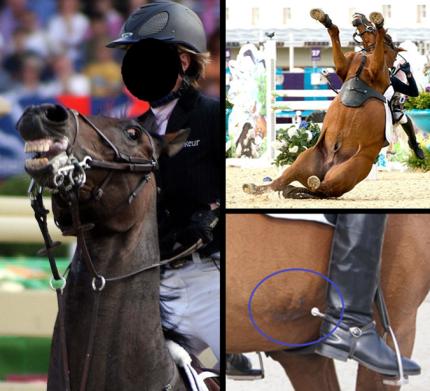 cavalo hipismo crueldade