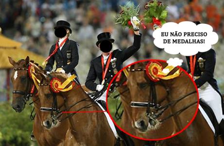 cavalos nao precisam de medalhas
