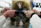 Rússia pretende enviar quatro macacos para Marte em 2017