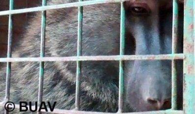 buav-quenia-babuinos-2