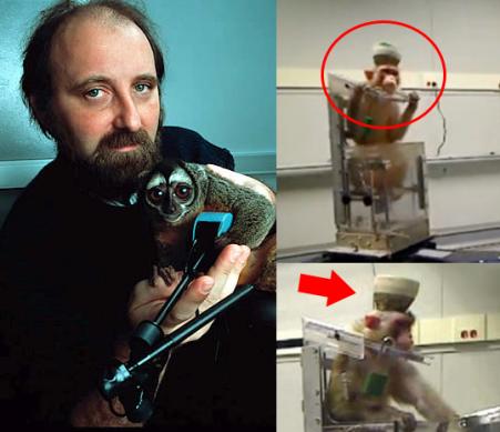 À esquerda, foto de Nicolelis com um macaco-da-noite-. À direita, registro de uma das pesquisas invasivas em macacos, feita por Nicolelis.