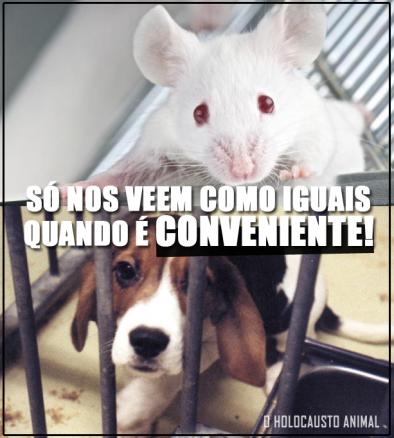 iguais-testes-em-animais
