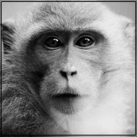 macaco-foto